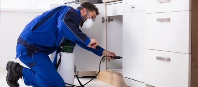 Pest Control Coverage: How to Keep Bugs Out of Your House