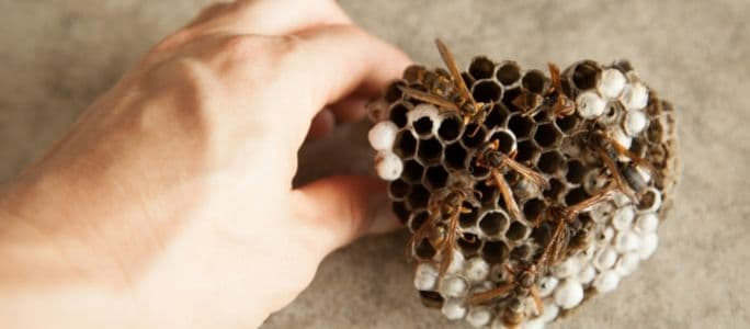 Does a Home Warranty Cover Bee Removal?
